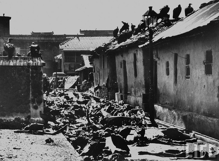 Another important event of the partition was the riot which occurred at Calcutta, also known as the 'Calcutta Mass Killings'. Many were killed and vultures fed themselves on the corpses of the deceased.