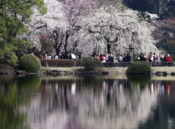 Cherry blossom flowers are reflected on a pond at Shinjuku Gyoen national garden in Tokyo.