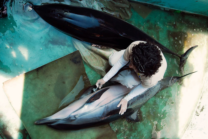 A veterinarian from the Zoological Foundation of El Salvador (FUNZEL) uses a stethoscope on a female dolphin in San Diego. A female and a male dolphin were rescued by local fishermen after they were found beached in two different spots along the coastline. Both animals have scratches and lacerations on their bodies and have been refusing food, according to veterinarians.
