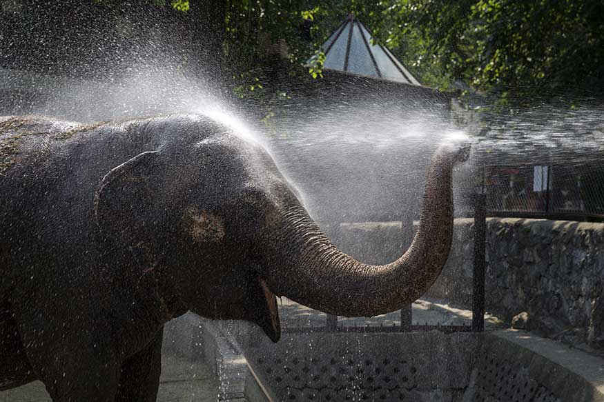 A zookeeper sprays water onto Twiggy, a 42 year-old asian elephant to help it cool down in its enclosure.