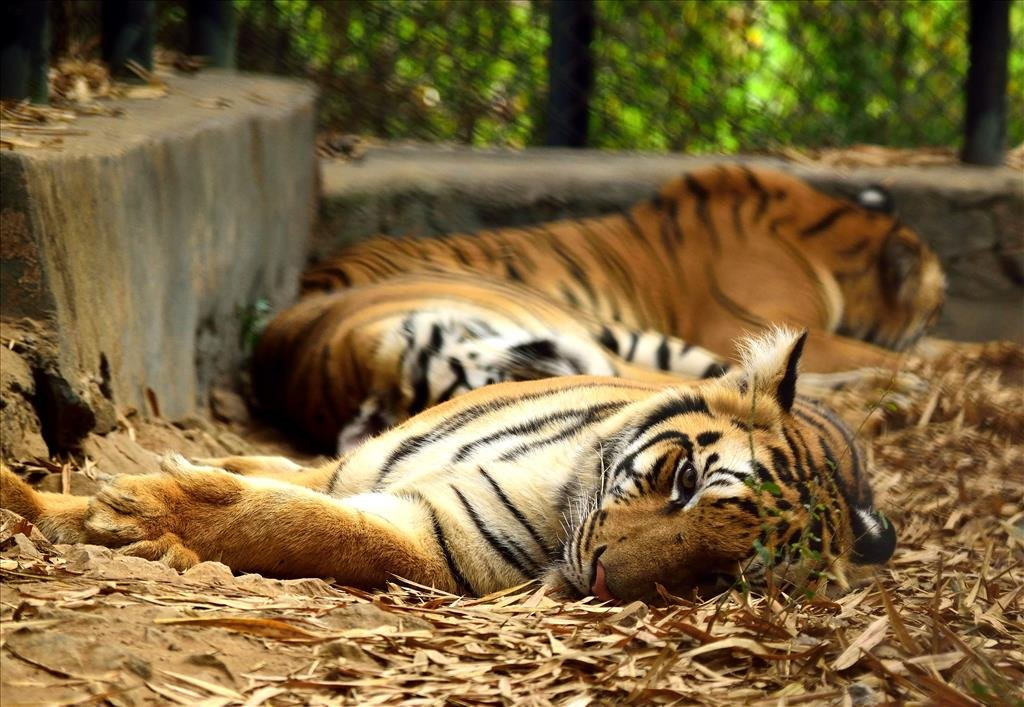 11. Spend a day walking around Vandalur Zoo
