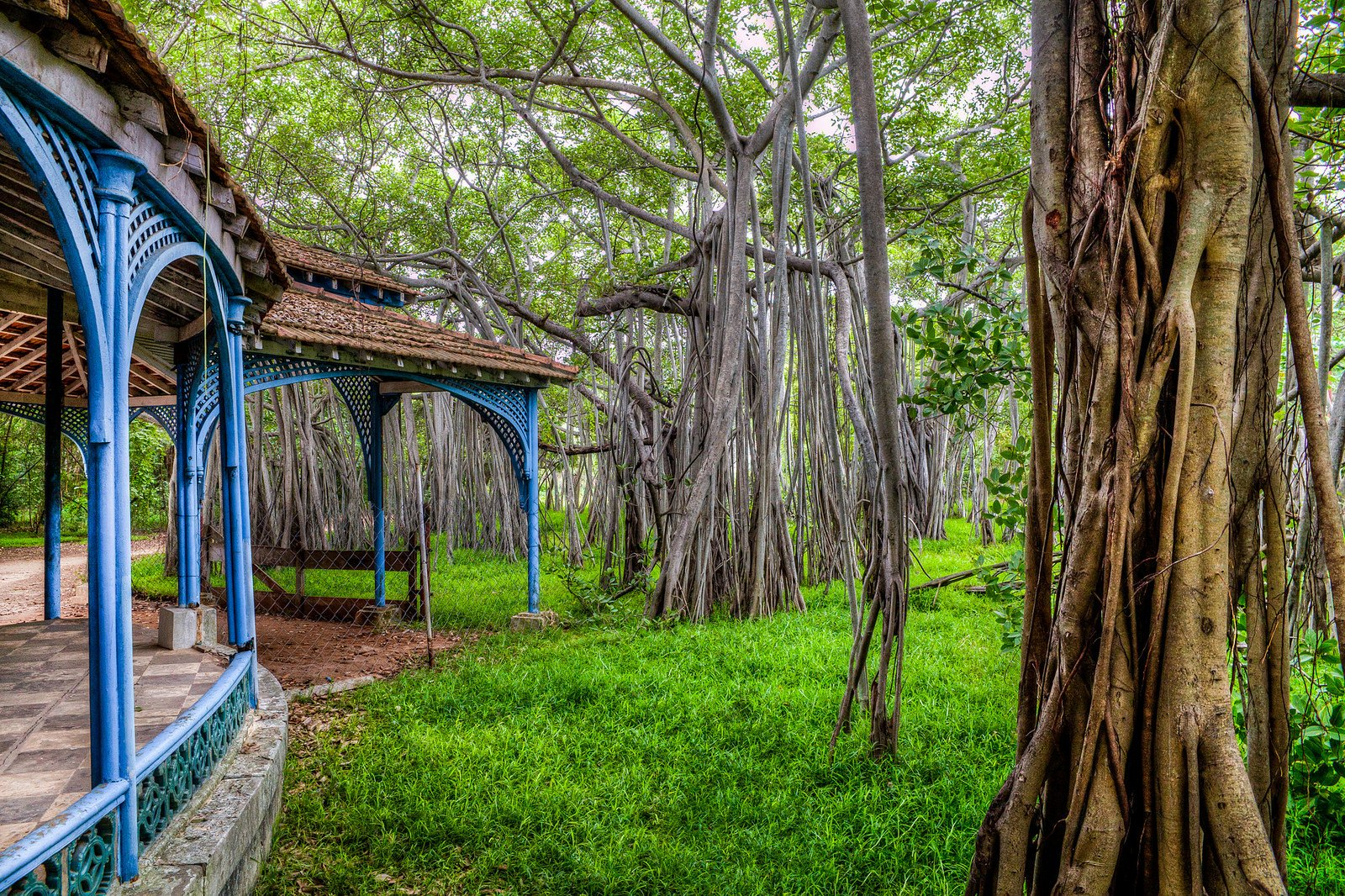 17. Experience calm at the Adyar Banyan Tree
