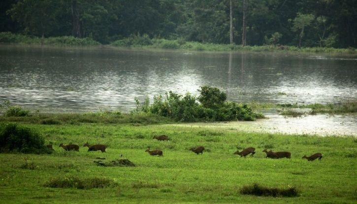 10. The situation in Assam is showing no signs of improving as rain continues.