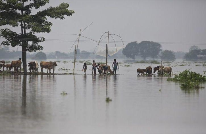 12. Animals continue to move towards a safer place as about 90 per cent of the Kaziranga National Park and 95 camps are underwater.