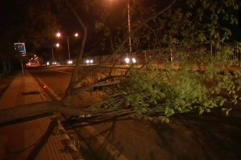 A tree fell down in the Cantonment area after a dust storm hit Delhi