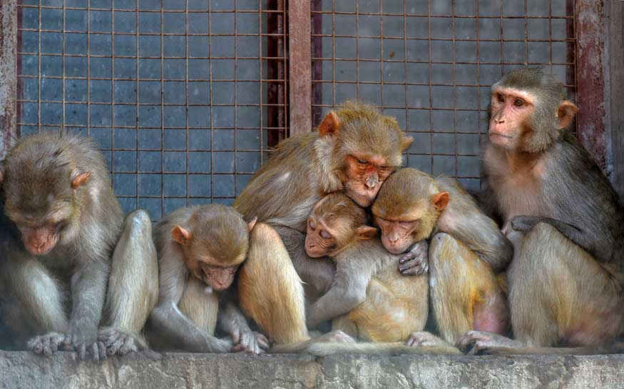 Monkeys sit together in a window shade to get some respite from the scorching heat.