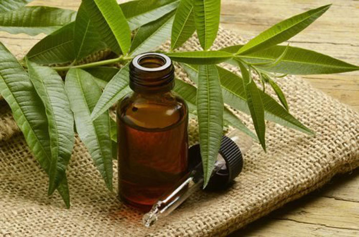 6. The anti-bacterial properties found in tea tree oil is a good solution for dealing with armpit smell and smothering odor-causing bacteria.