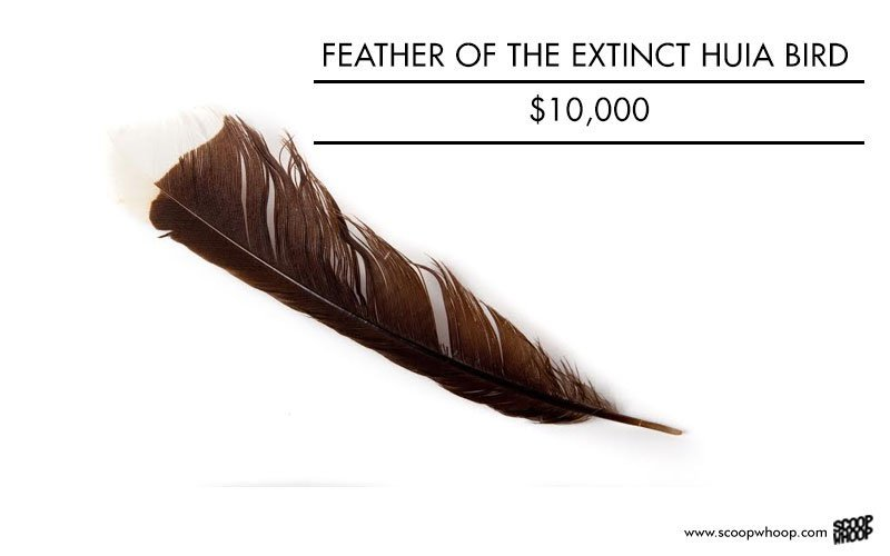 Feather of Huia Bird, 10,000 USD