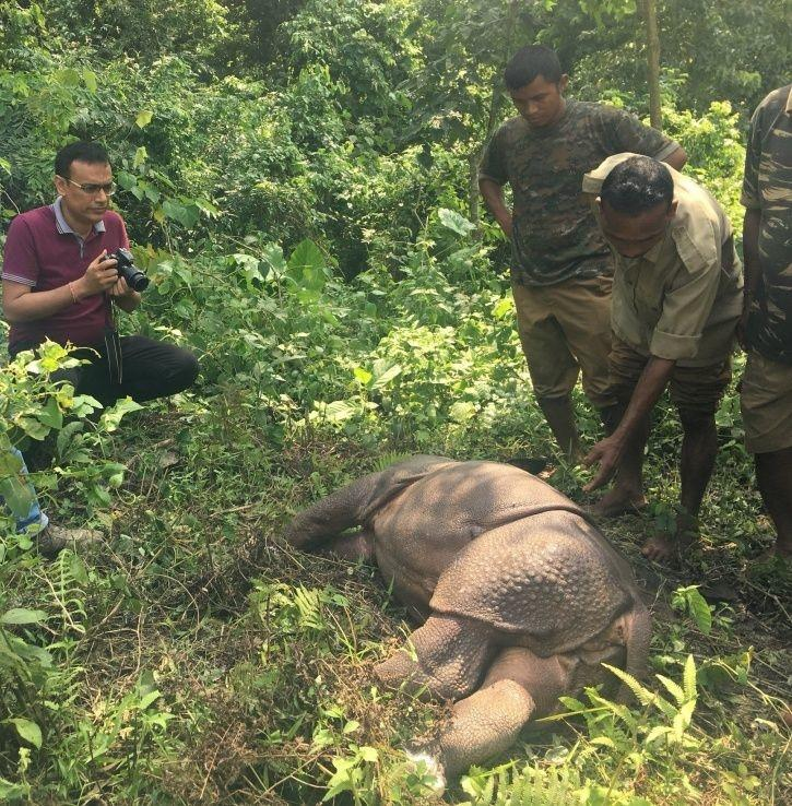 7. Kaziranga Park officials and teams from International Fund for Animal Welfare and Wildlife Trust of India have been rescuing these distressed creatures in every way possible.